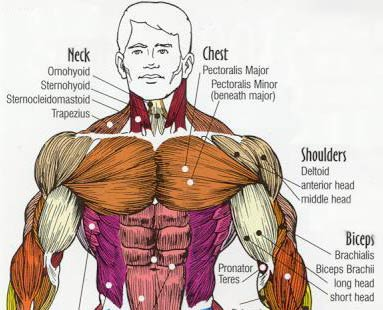 How to get a big chest | TheBodybuildingBlog